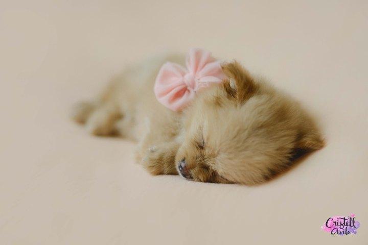 cristell-avila-fotografia-de-bebes-newborn-dog-villahermosa-tabasco-mexico-puebla-15