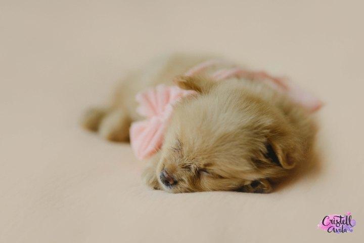 cristell-avila-fotografia-de-bebes-newborn-dog-villahermosa-tabasco-mexico-puebla-16