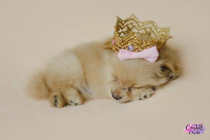 cristell-avila-fotografia-de-bebes-newborn-dog-villahermosa-tabasco-mexico-puebla-17