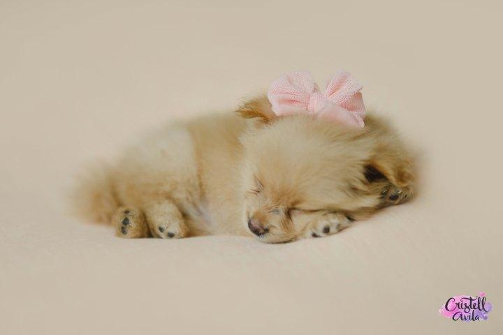 cristell-avila-fotografia-de-bebes-newborn-dog-villahermosa-tabasco-mexico-puebla-18