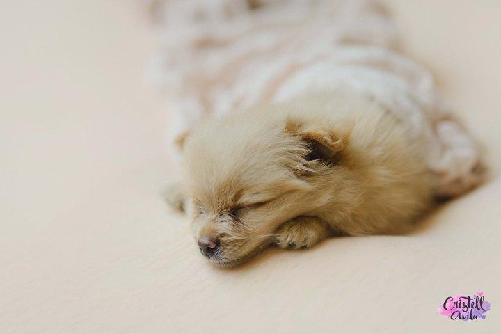 cristell-avila-fotografia-de-bebes-newborn-dog-villahermosa-tabasco-mexico-puebla-19