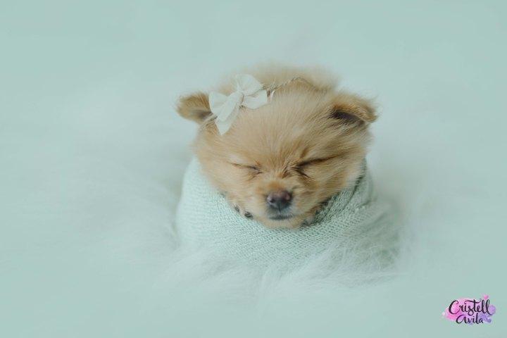cristell-avila-fotografia-de-bebes-newborn-dog-villahermosa-tabasco-mexico-puebla-2