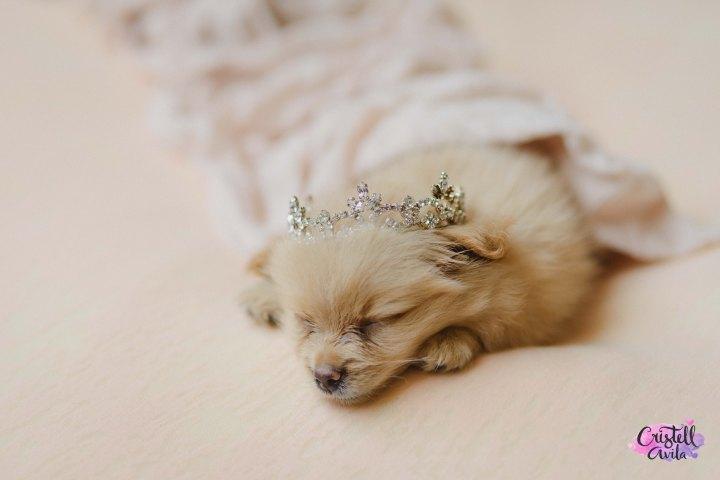 cristell-avila-fotografia-de-bebes-newborn-dog-villahermosa-tabasco-mexico-puebla-20