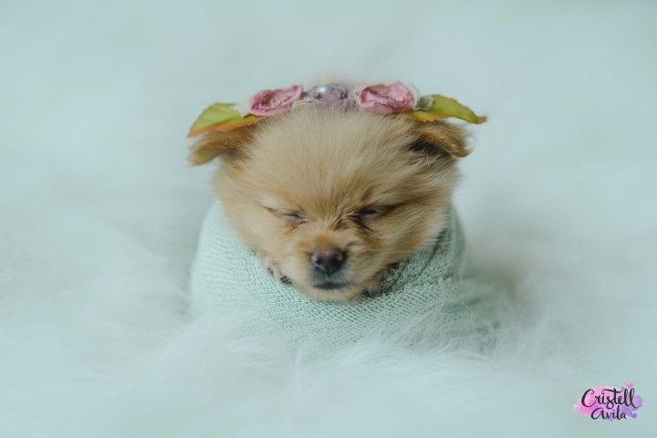 cristell-avila-fotografia-de-bebes-newborn-dog-villahermosa-tabasco-mexico-puebla-21
