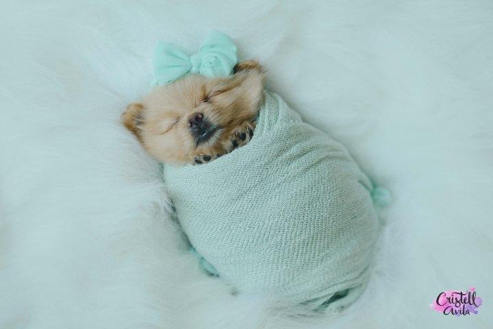 cristell-avila-fotografia-de-bebes-newborn-dog-villahermosa-tabasco-mexico-puebla-22