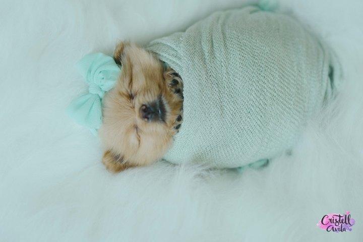 cristell-avila-fotografia-de-bebes-newborn-dog-villahermosa-tabasco-mexico-puebla-23