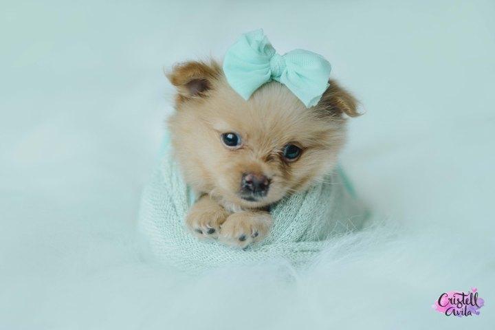 cristell-avila-fotografia-de-bebes-newborn-dog-villahermosa-tabasco-mexico-puebla-24