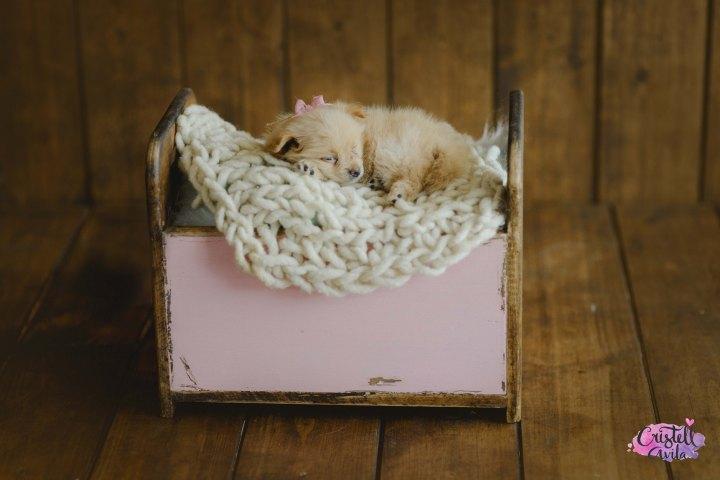 cristell-avila-fotografia-de-bebes-newborn-dog-villahermosa-tabasco-mexico-puebla-25
